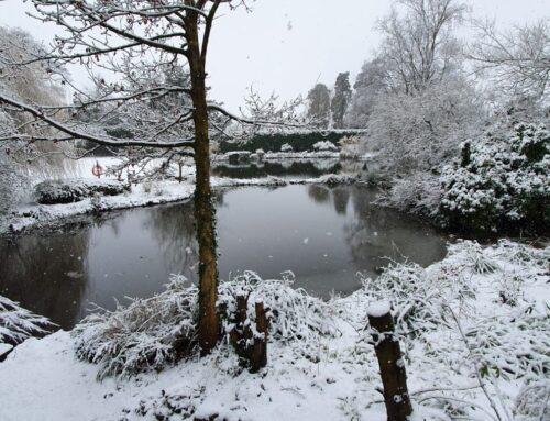 Hawkstone Hall & Gardens announces luxury Christmas breaks